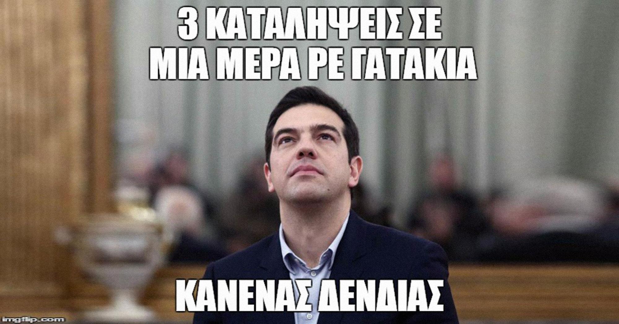 Katal-meme1